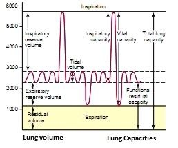 Spirogram showing lung volume and lung capacities